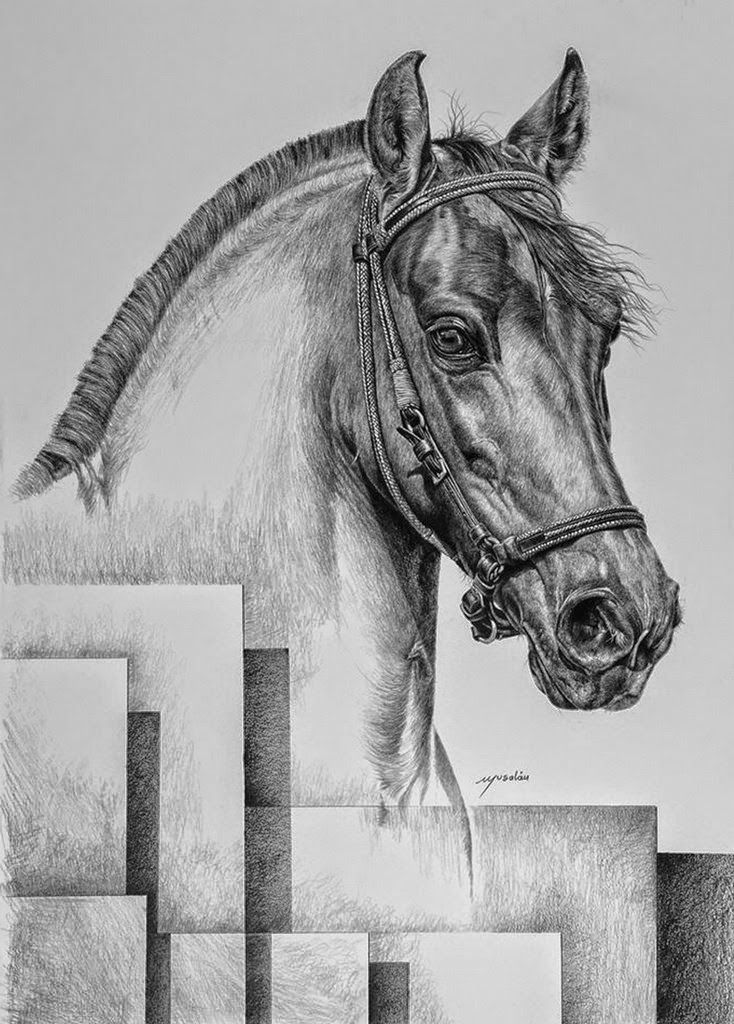 fotos originales sobre caballos - Buscar con Google | CABALLOS ...