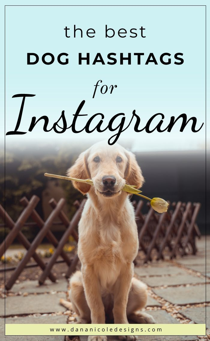300 Copy Paste Of The Best Puppy Dog Hashtags Dog Hashtags Dog Instagram Captions Best Puppies
