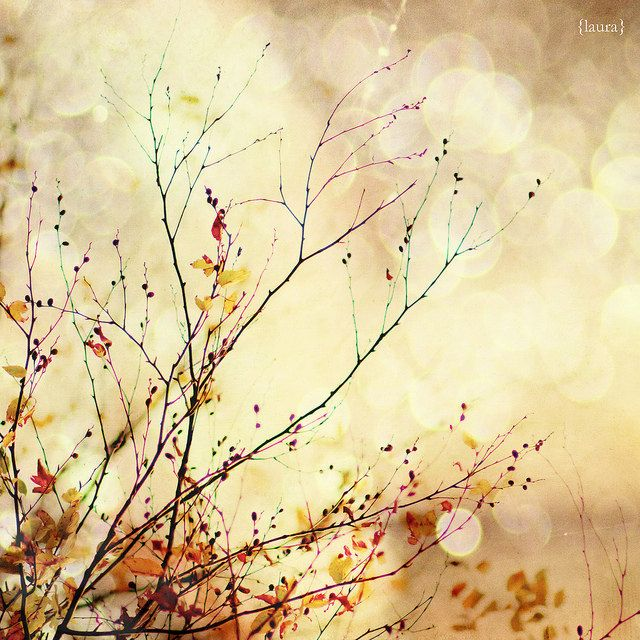Autumnal Bliss - Nature Photography - Fall Leaves - Orange ...