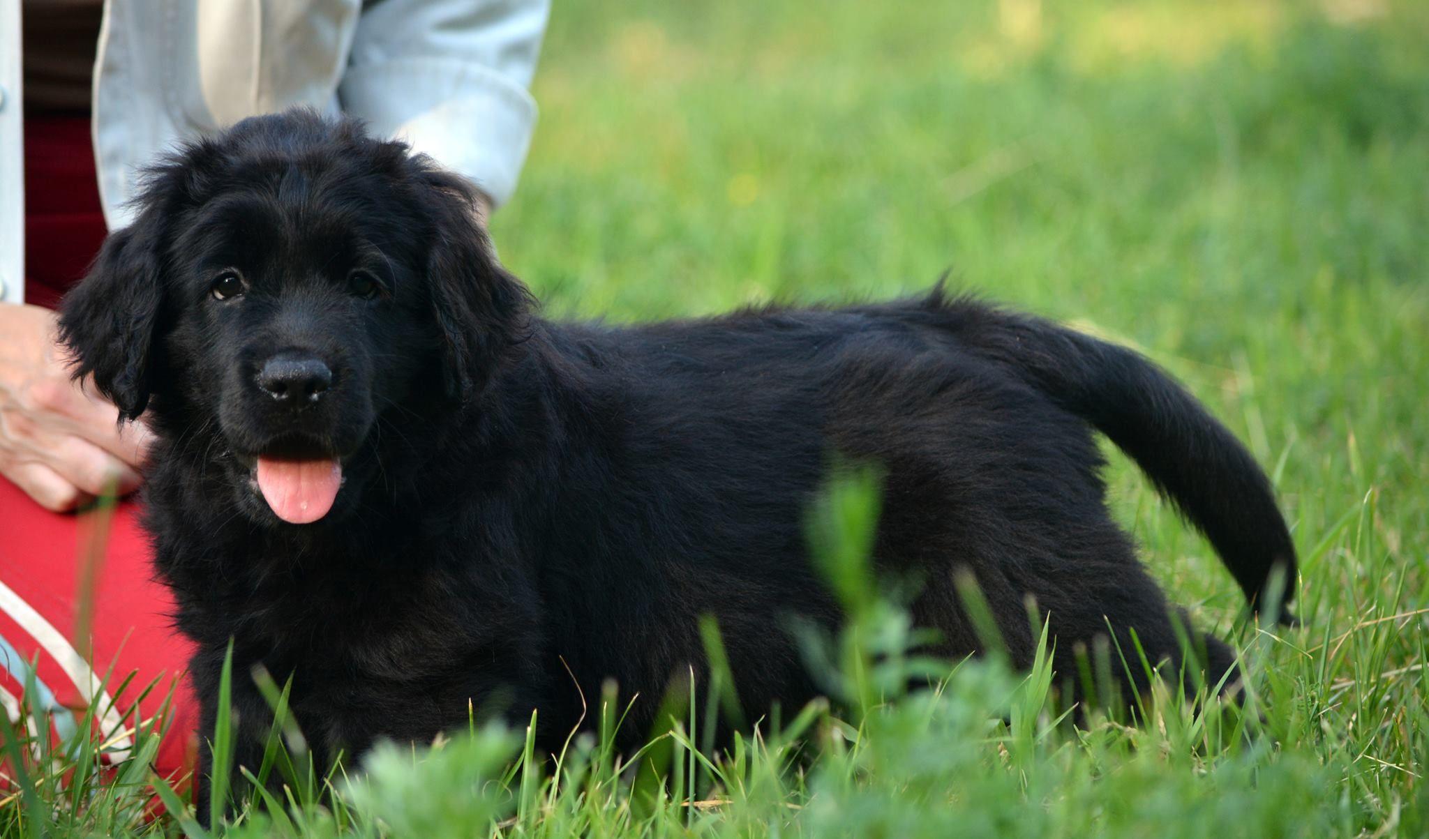 Most Inspiring Labrador Black Adorable Dog - a55c05851c8405940620735c86966176  Snapshot_696747  .jpg