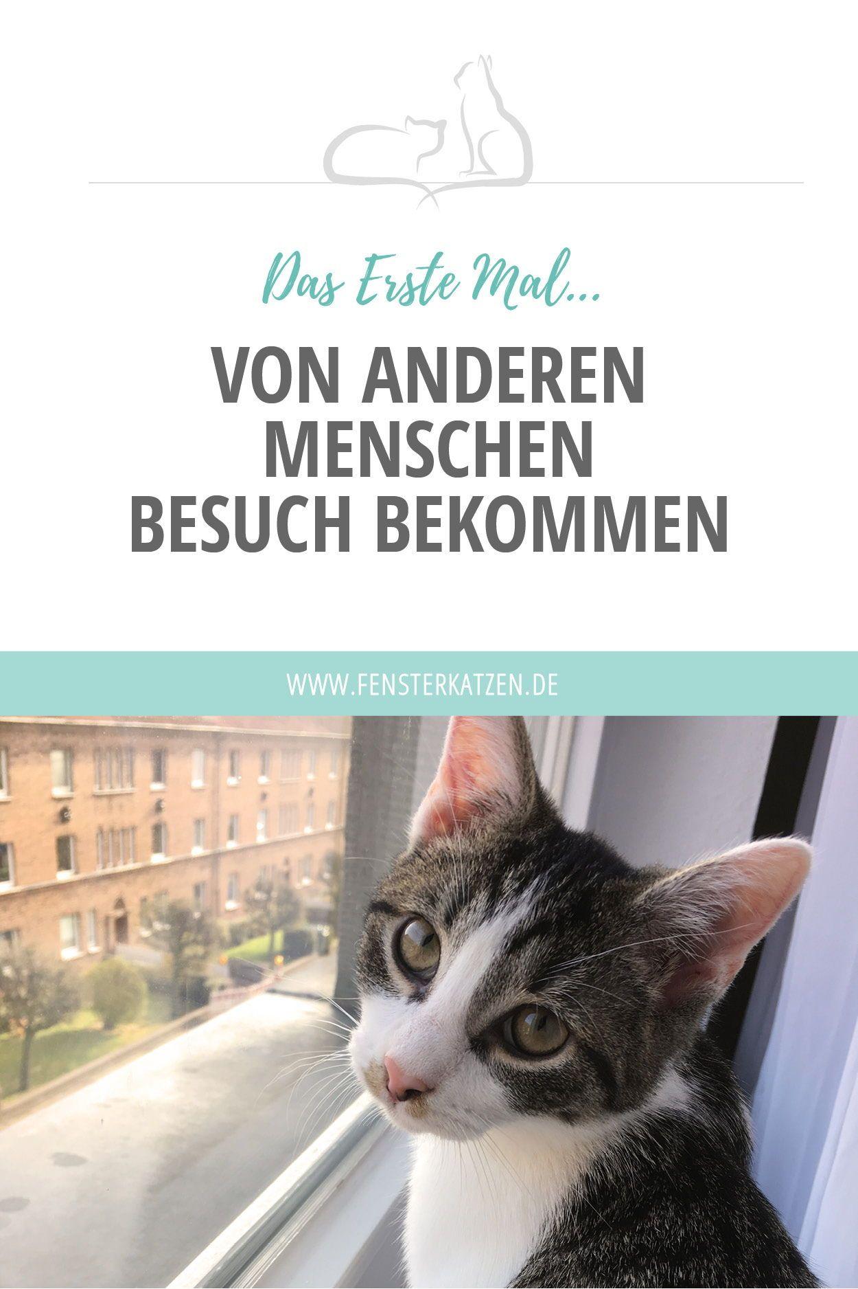 Erstes kennenlernen katzen