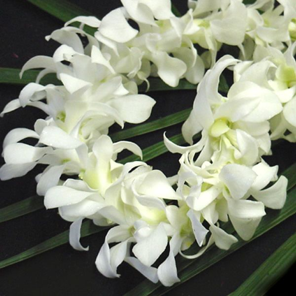 Full white orchid lei things i love pinterest orchid lei and costa mesa ca flower delivery mightylinksfo Images