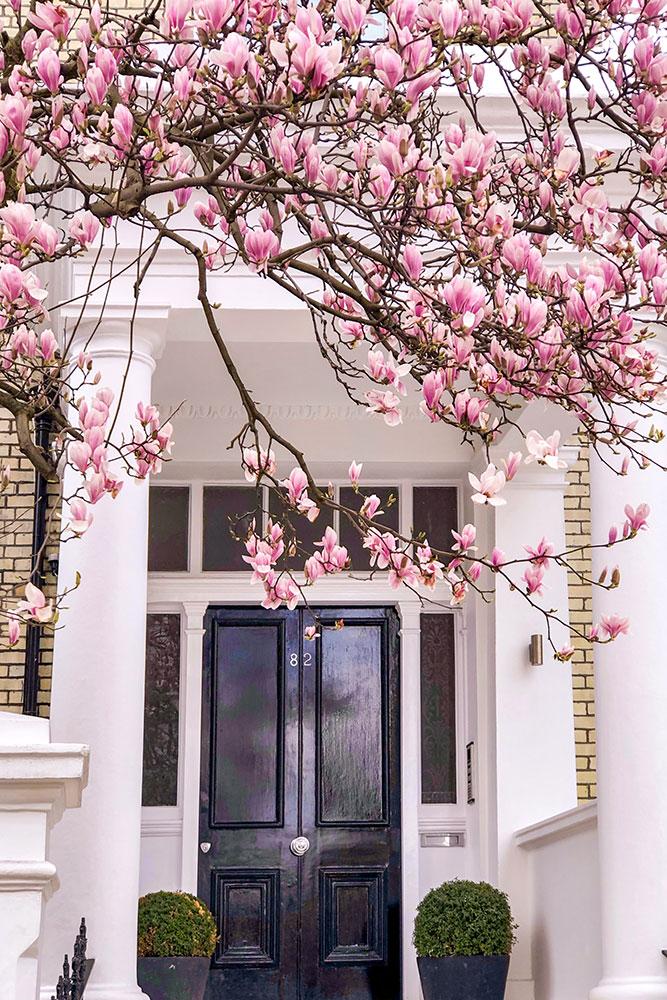 White House Black Door London Google Search Blossom House Cherry Blossom Fancy Houses