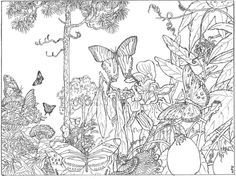 80 Hidden Animals Coloring Pages Download Free Images
