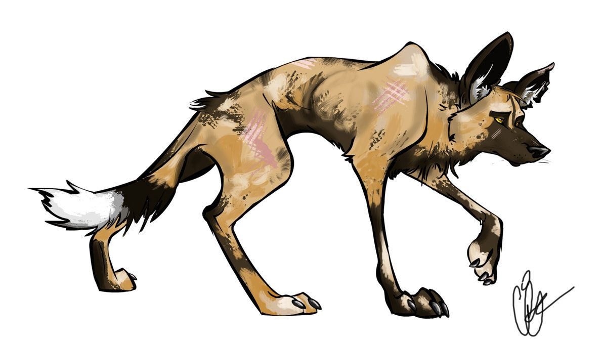 How To Draw An African Painted Dog Pencil Sketch