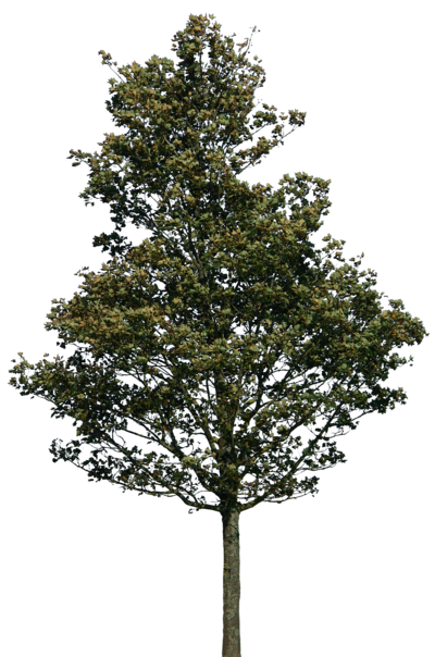 tree 38 png by gd08.deviantart.com on @deviantART | PSD ...