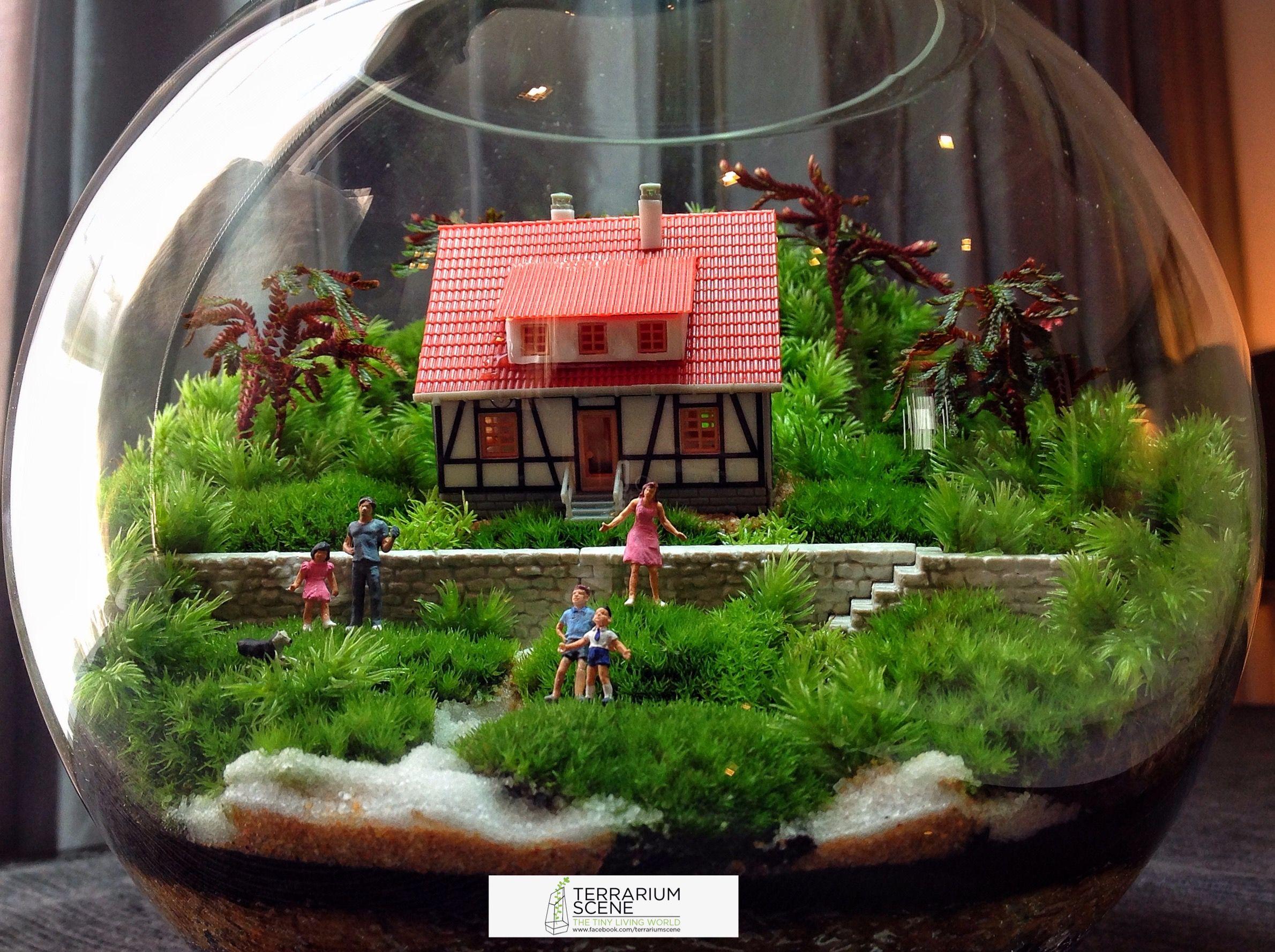 Terrarium Scene, Garden Terrarium, Terrariums, Moss Garden, Bonsai, Miniatures, Jars,