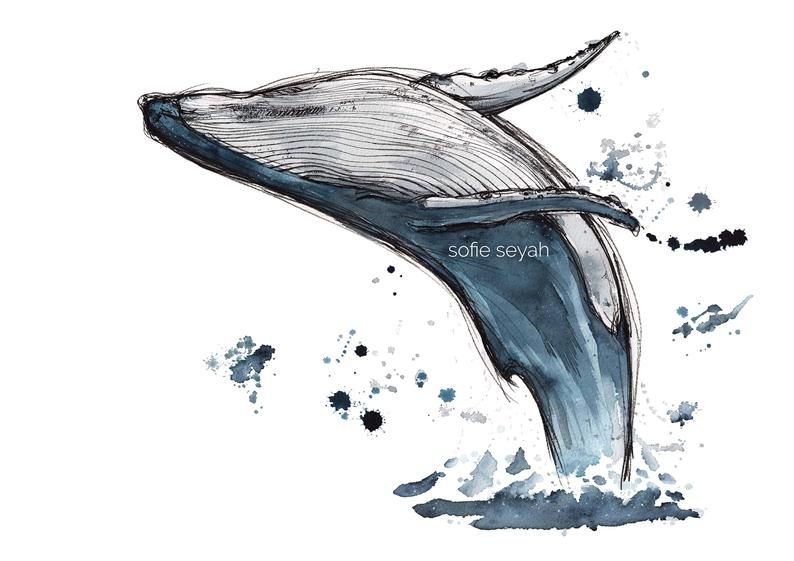 Humpback Whale Breach - Sofie Seyah Illustration - Indigo Ink and Watercolour - Art Print