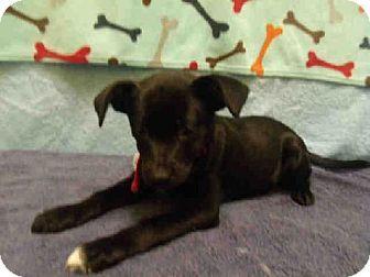 Upper Marlboro Md Patterdale Terrier Fell Terrier Mix Meet Dakodah A Puppy For Adoption Pets Animal Shelter Patterdale Terrier