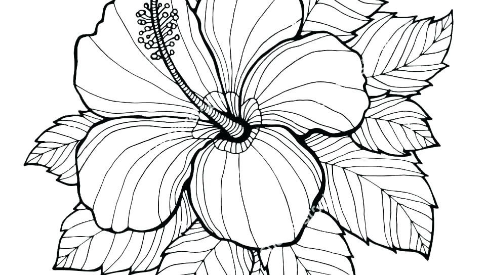 Easy Flower Coloring Pages For Adults Flower Coloring Sheets Coloring Pages Printable Flower Coloring Pages