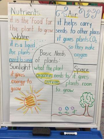 basic needs of plants ms hernandez 39 2nd grade blog science pinterest anchor charts. Black Bedroom Furniture Sets. Home Design Ideas