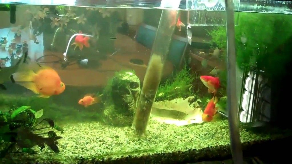 5 Tips on How to Clean a Fish Tank Properly Stay at Home
