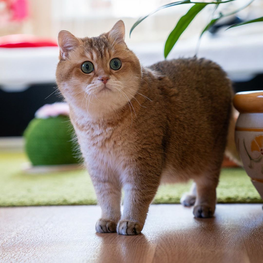 Home Made Cat Cat Cat S Dog Cat Kitty Cat Copy Cat Pets Cats Make Cat Cats Make How To Cat Cats Cats Cats Cute Cat Cat F In 2020 Baby