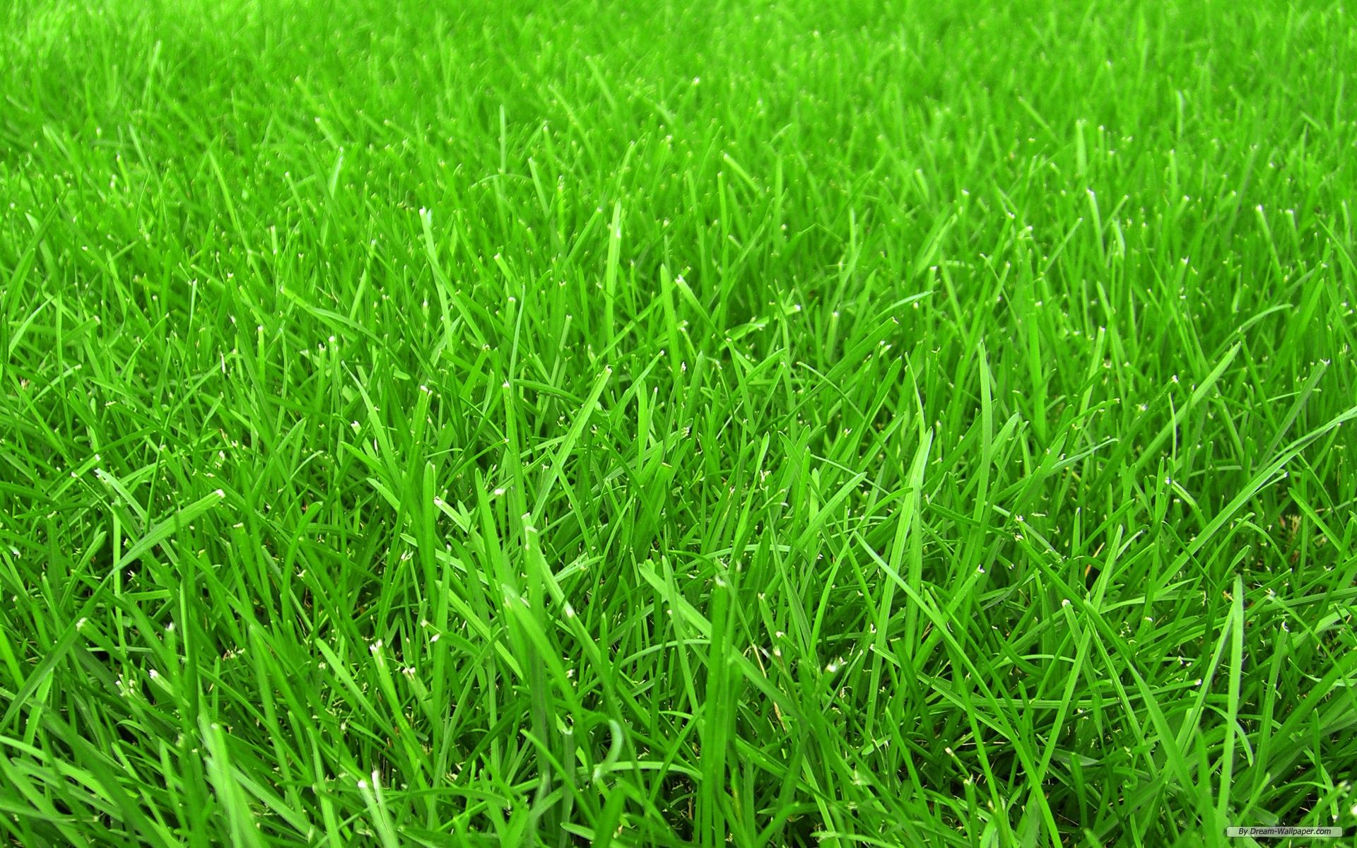 Free grass backgrounds free wallpaper free nature