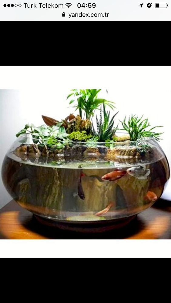 How to Make a Terrarium in a Glass Bowl  DUDI   Animal de soutien émotionnel is part of Indoor water garden - How to Make a Terrarium in a Glass Bowl Terrarium how to make a terrarium   Lilith Tarotloving my latest Christmas craft  Glass Fishbowl…My dream terrarium   hansi Bremond Fish terrarium Fish Bowls For Convenience Store Displays  … Fish bowl containers are ideal for more than just giving a home to your pet! These versatile