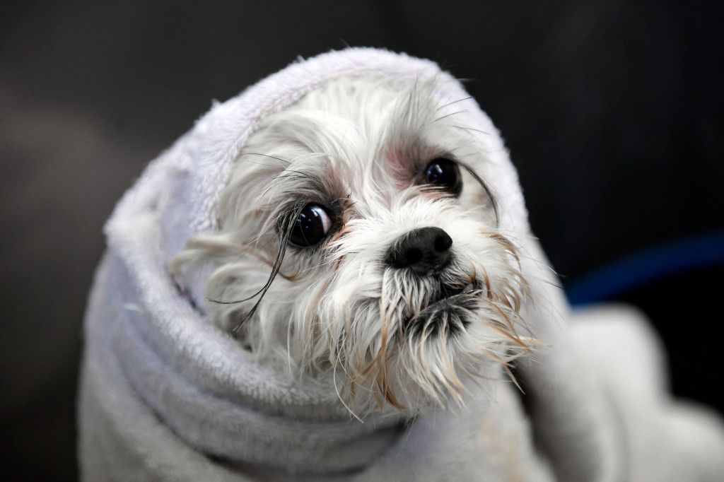 A look at the life of Colorado's pampered dogs — and how