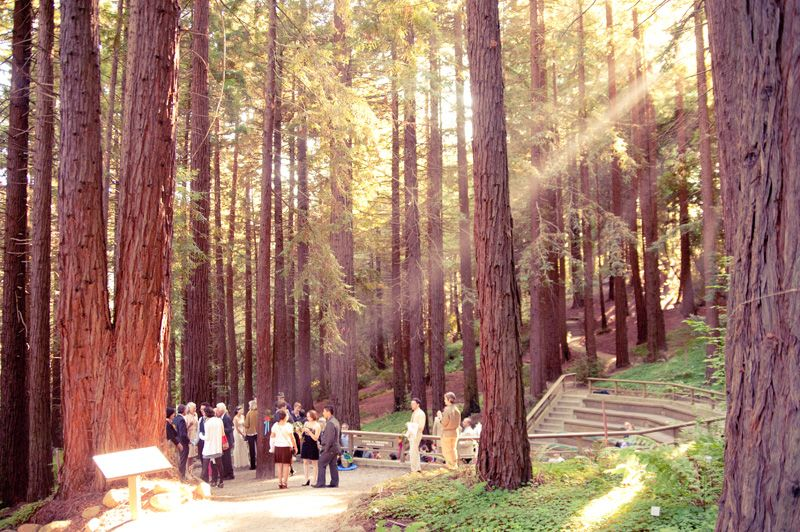 The Ceremony Took Place In The Beautiful Redwood Grove At The Uc Berkeley Botanical Garden Our Th Garden Wedding Botanical Gardens Botanical Gardens Wedding