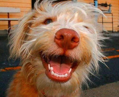 happy #hund #lächeln #smile