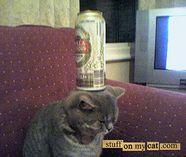Stuffonmycat2_1