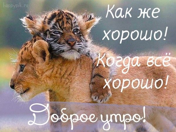 Dobroe Utro Prikolnye Kartinki Obyatiya Zhivotnyh Dobroe Utro