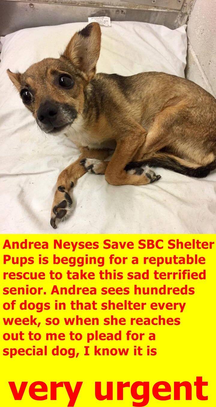 Rescued San Bernardino Ca A505757 Available 7 15 17