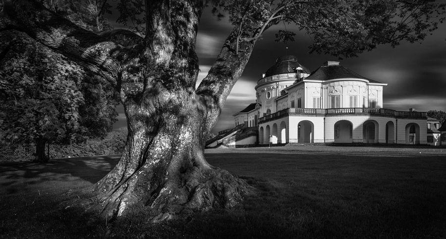King of the park by Rolf Nachbar - Photo 71737611 - 500px