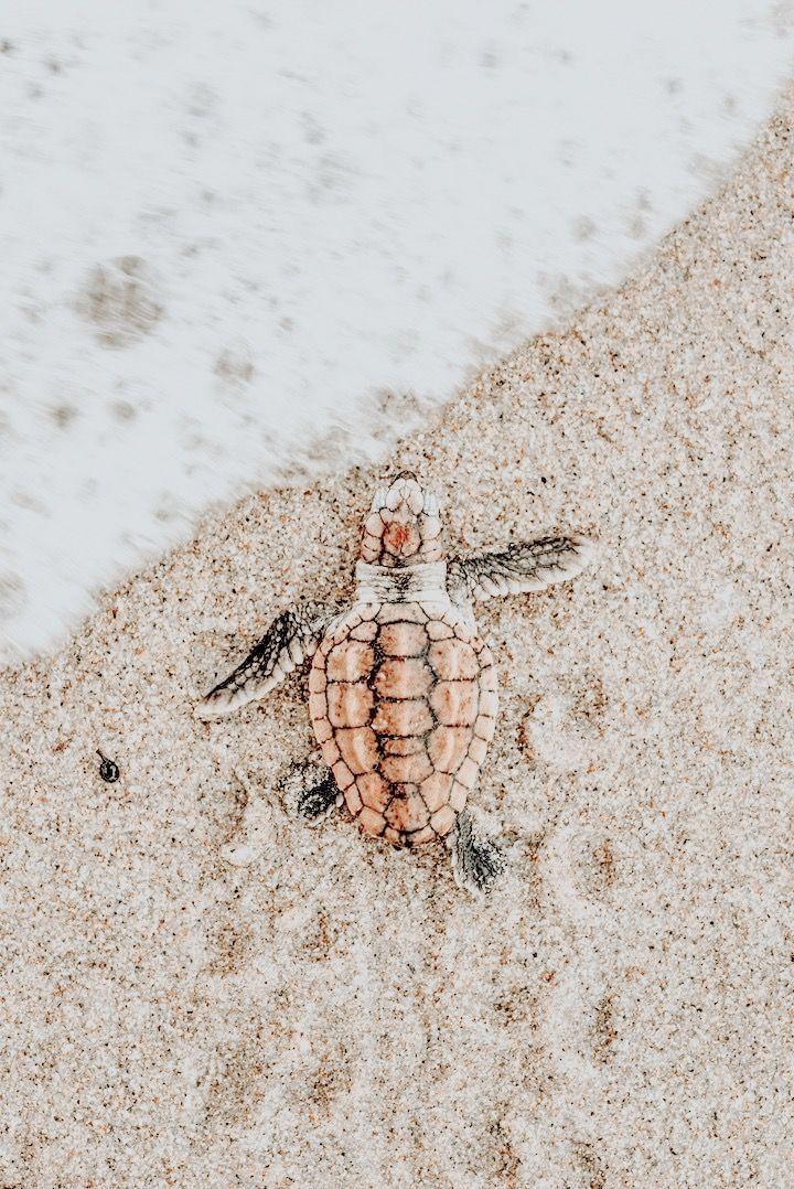 Good Photos Turtles Pet Aesthetic Suggestions Jasmine Kirkland S Animal Blog Turtle Wallpaper Beach Wall Collage Cute Turtles