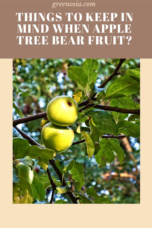 23++ When do apple trees bear fruit ideas