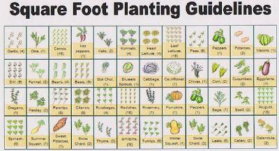 Eat Live Grow Paleo Square Foot Gardening Planning – Planning A Square Foot Garden