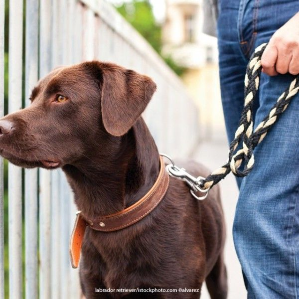 3 Steps To Keep Your Dog From Being Aggressive On Walks