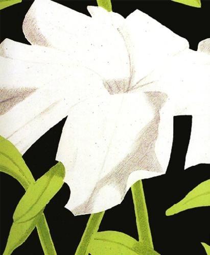 White Petunia by ALEX KATZ.