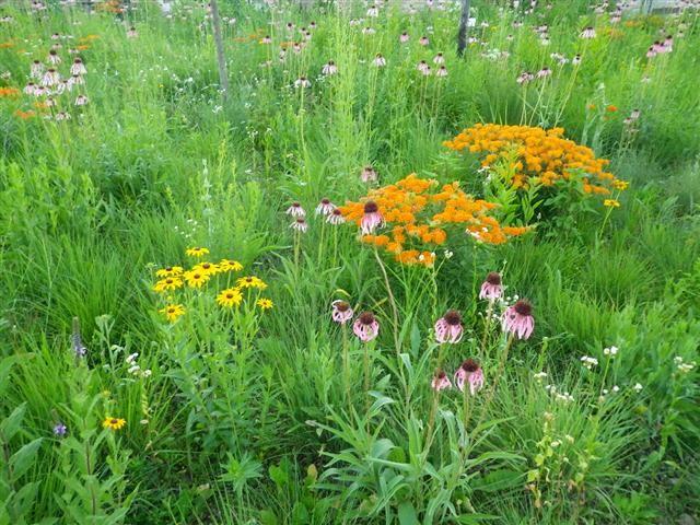 Midwest Prairies Woodland Prairie And Habitat Restoration In