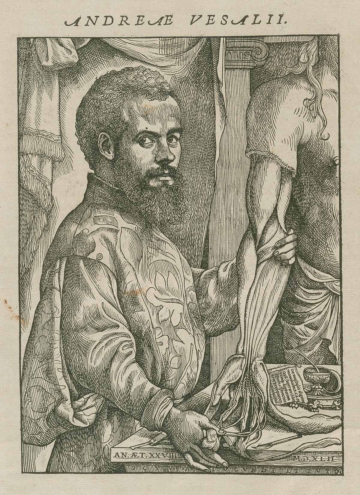 Andreas Vesalius The 16th Century Physician From Brussels Is
