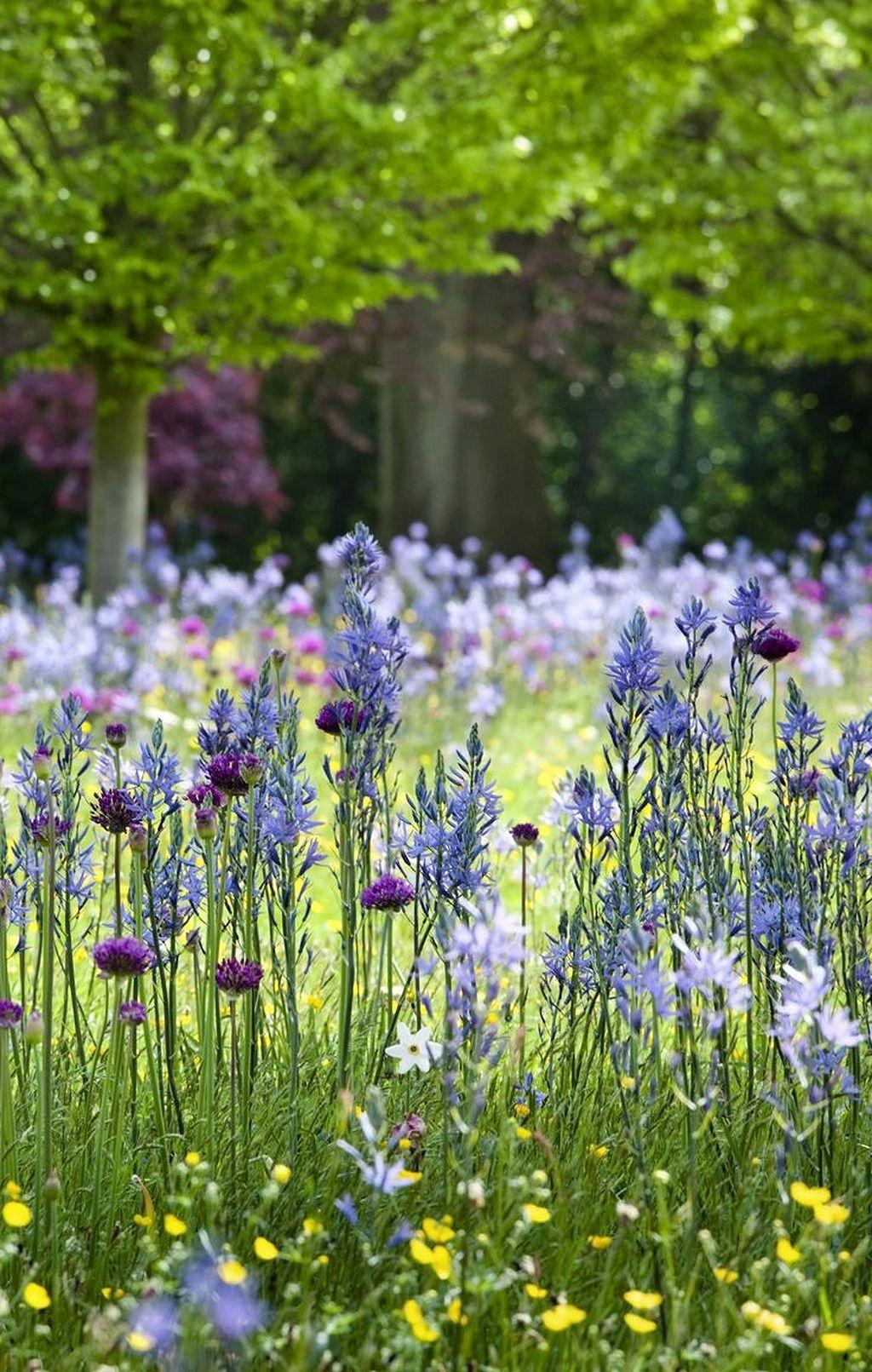 Gorgeous Beautiful Wild Flower Garden Httpsgardenmagz