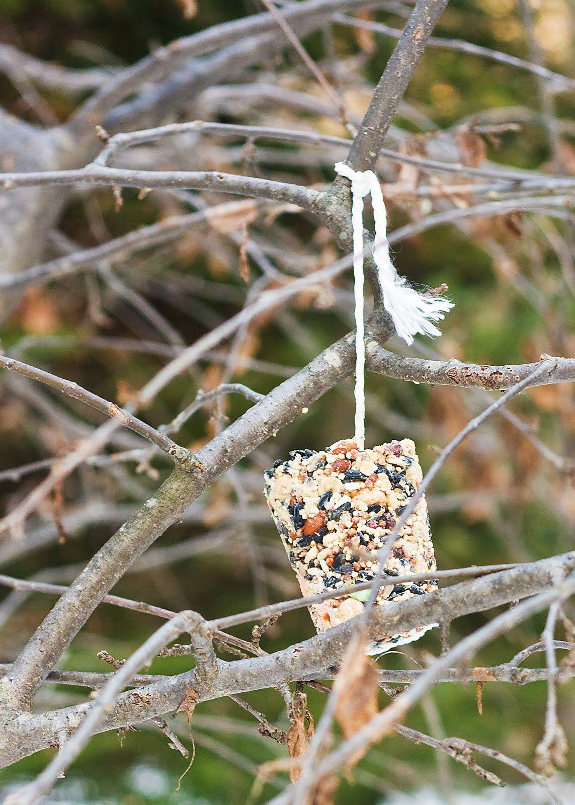 Homemade Bird Suet Great Kid Project For Winter A