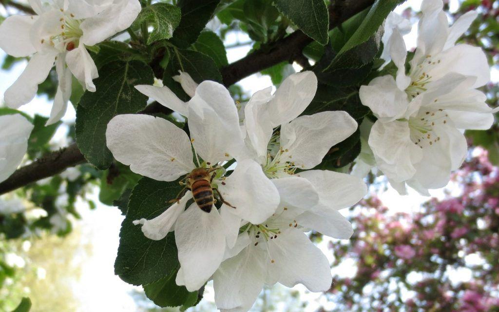 Bienenfreundliche Pflanzen Die Besten Ideen Fur Garten Und Balkon Utopia De Bienenfreundliche Pflanzen Pflanzen Balkon Pflanzen