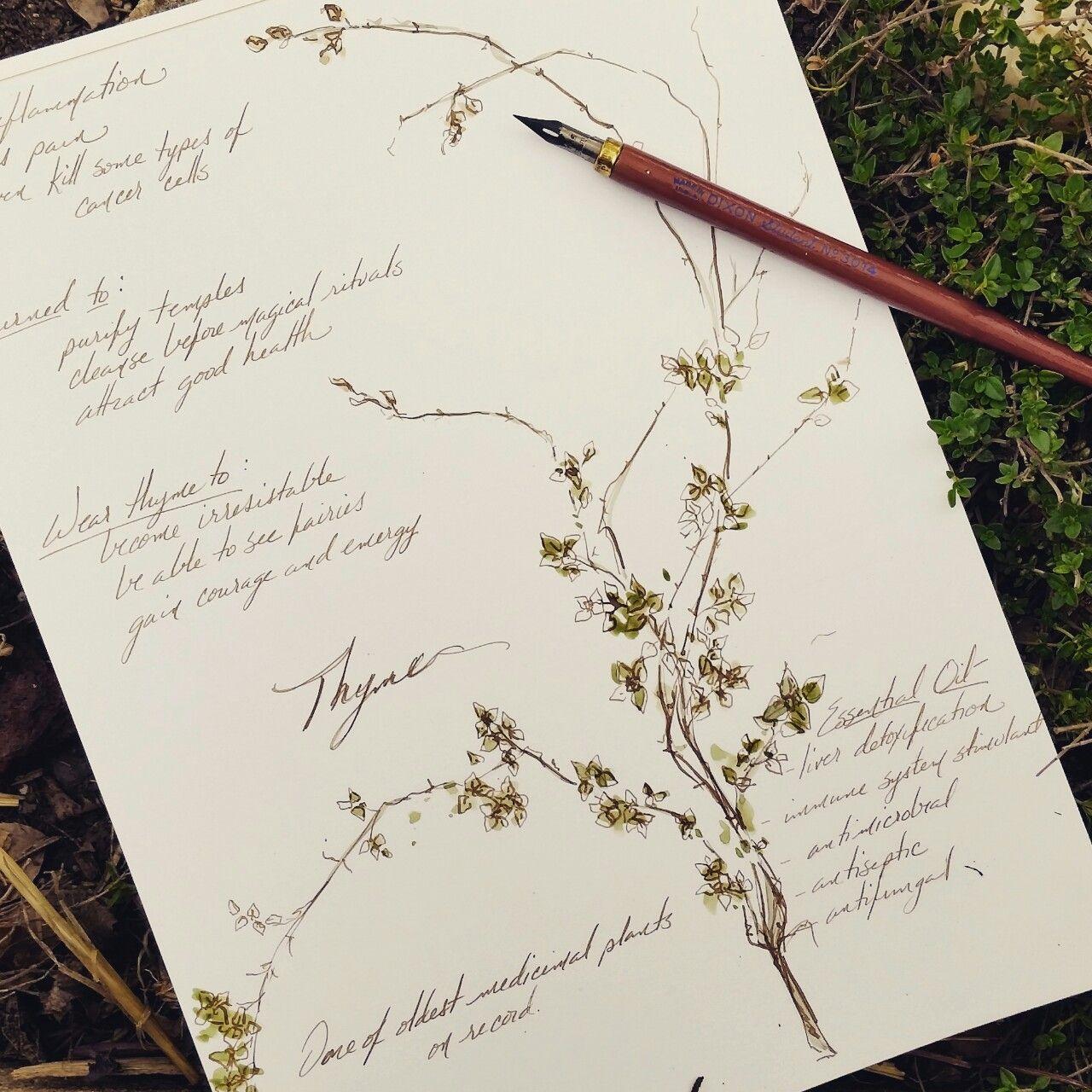 Oak and Hawthorn