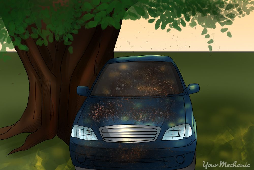car parked under tree covered with sap Car, Sap removal