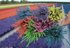 Image Result For Heather Flower Colors Heather Flower Heather Plant Colorful Bouquet