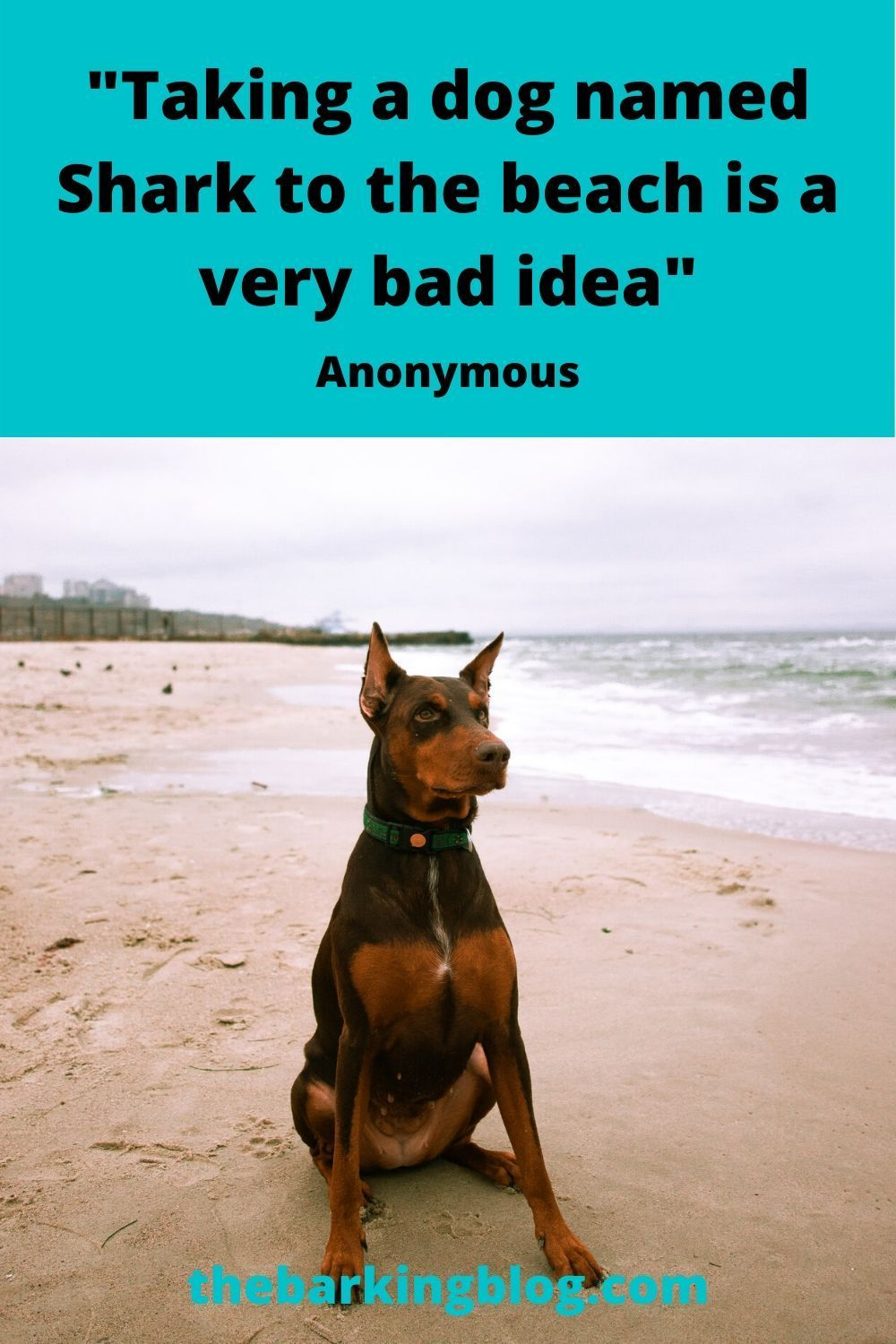Funny Dog Quote And Dog Meme Taking A Dog Named Shark To The Beach Is A Very Bad Idea In 2020 Dog Quotes Funny Dog Quotes Dog Memes