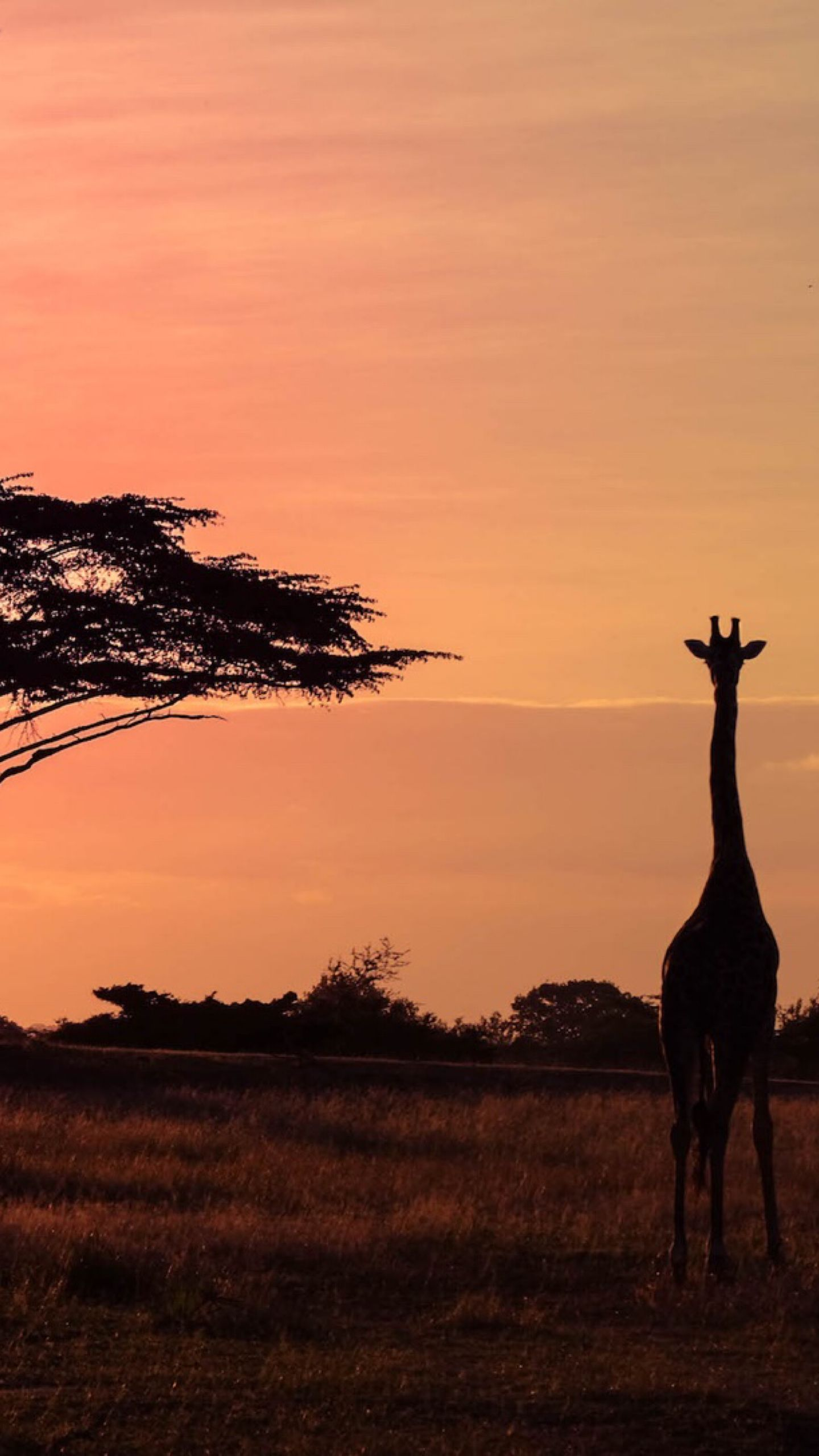 Inside Tanzania's Selous Game Reserve • Your Ultimate