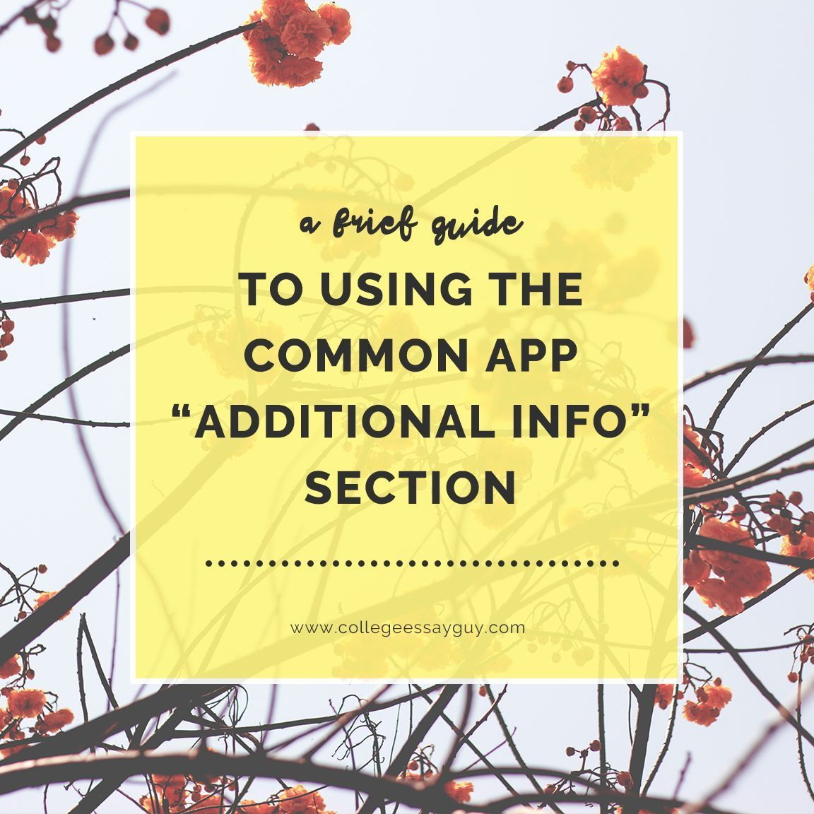 How to write the common app additional information