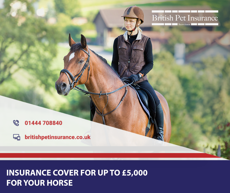 British Pet Insurance I Insurance for horses, ponies & exotic pets