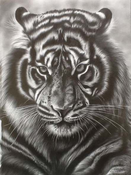 Tattoo Animal Tiger Pictures 47+ New Ideas
