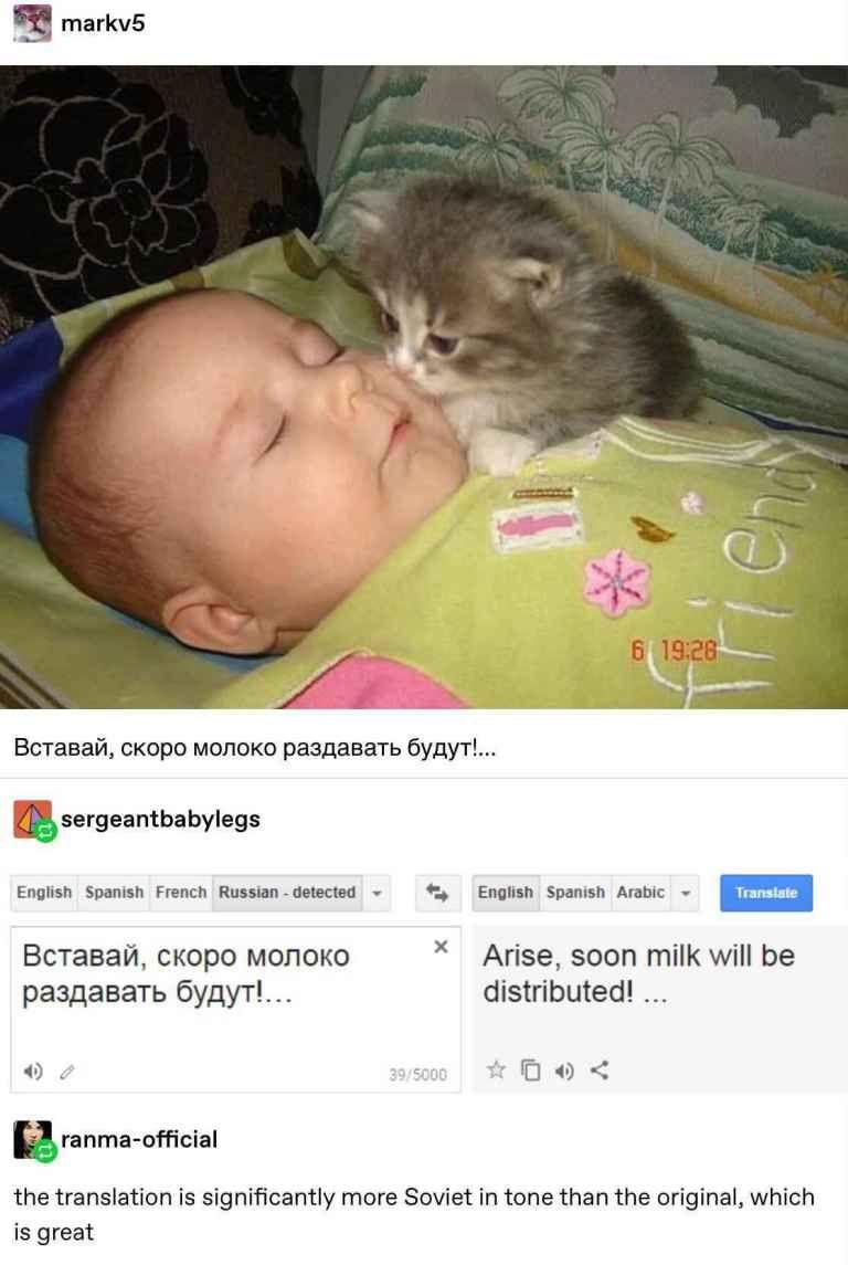 26 Smartest Tumblr Posts To Kill Boredom The Webly Tumblr Funny Russian Cat Funny Cute