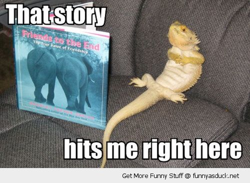 a56829a30e65ab96641d3dcd1b1c0f8b funny pictures with books hits me here funny as duck funny