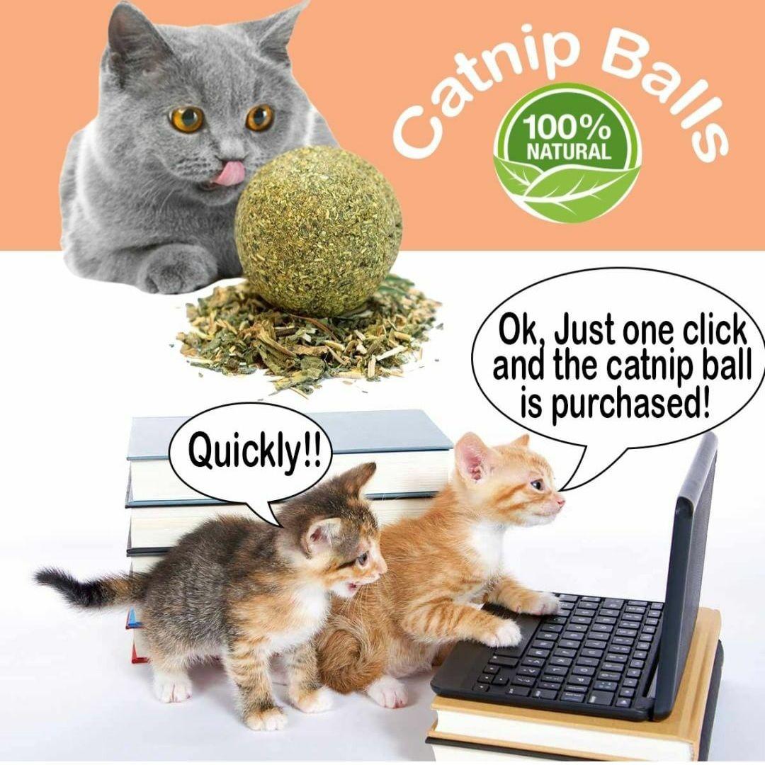 Pin On Cat Lovers Catnip Toys Catnip Plants