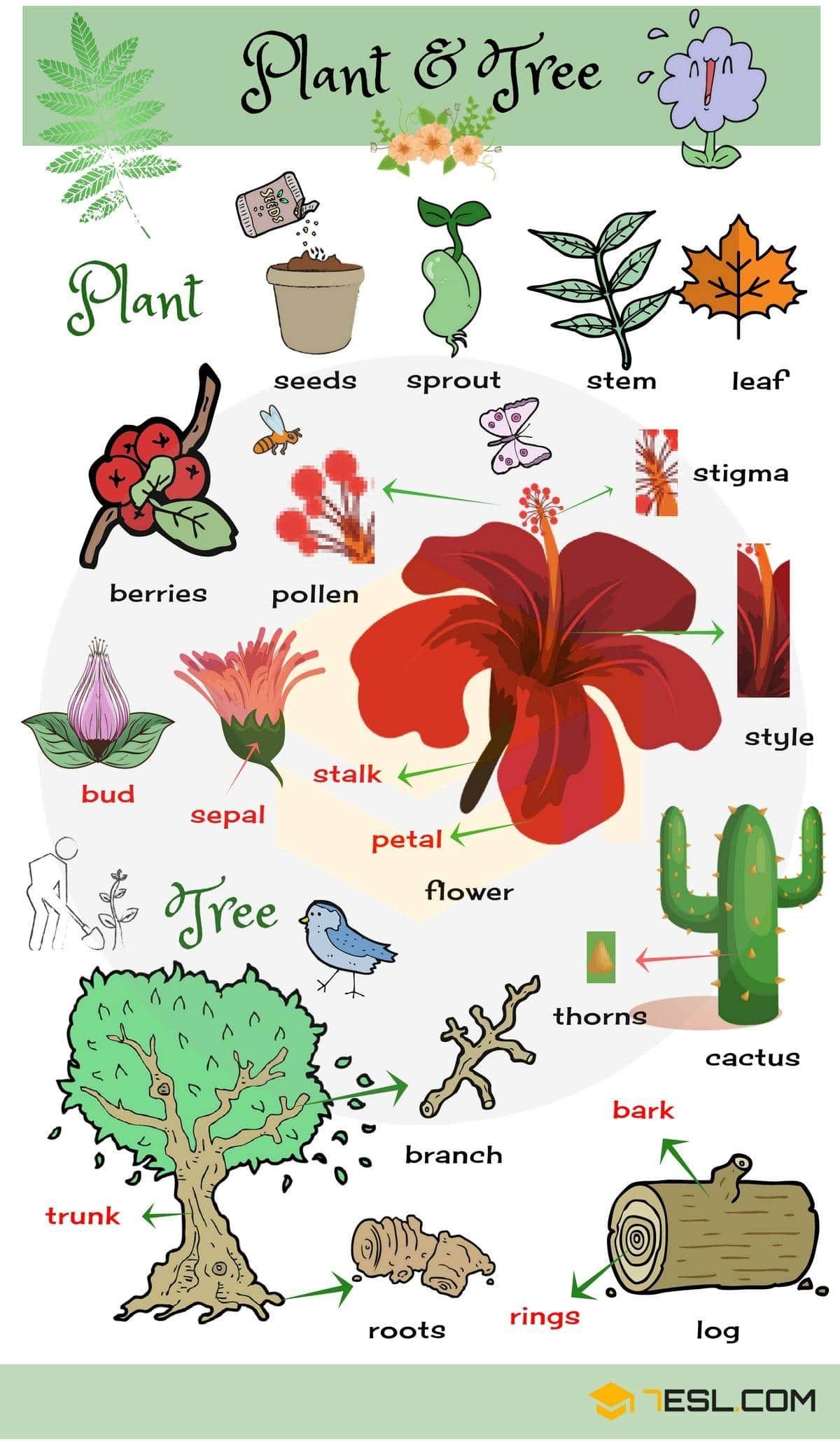 Plants And Trees Vocabulary English Vocabulary English Language Learning English Language Teaching