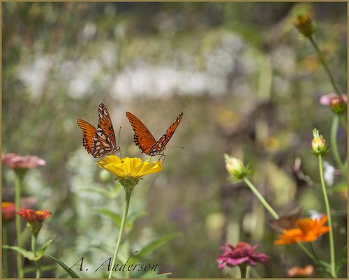 Butterflies sharing Flying flowers, Flowers, Garden