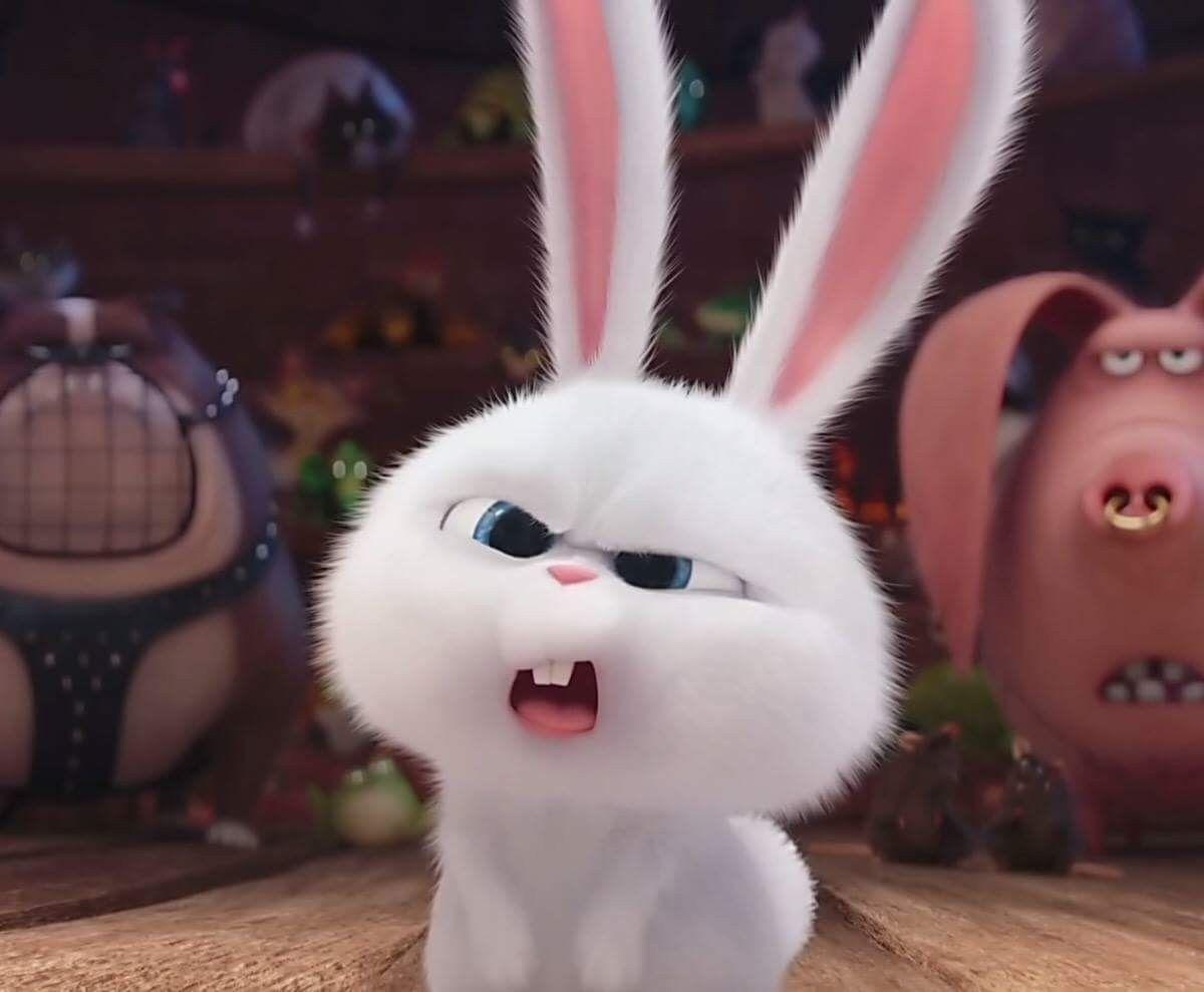 Картинка недовольного зайца